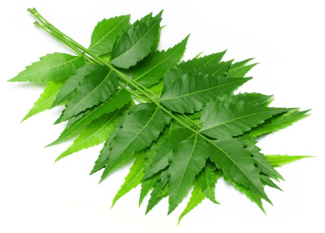 neem-leaves-and-its-uses
